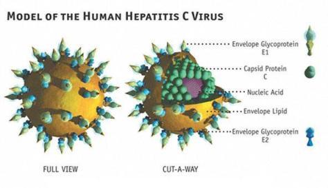 sida virus poza
